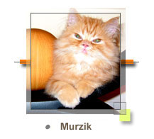 Murzik - Pedigree Click Here